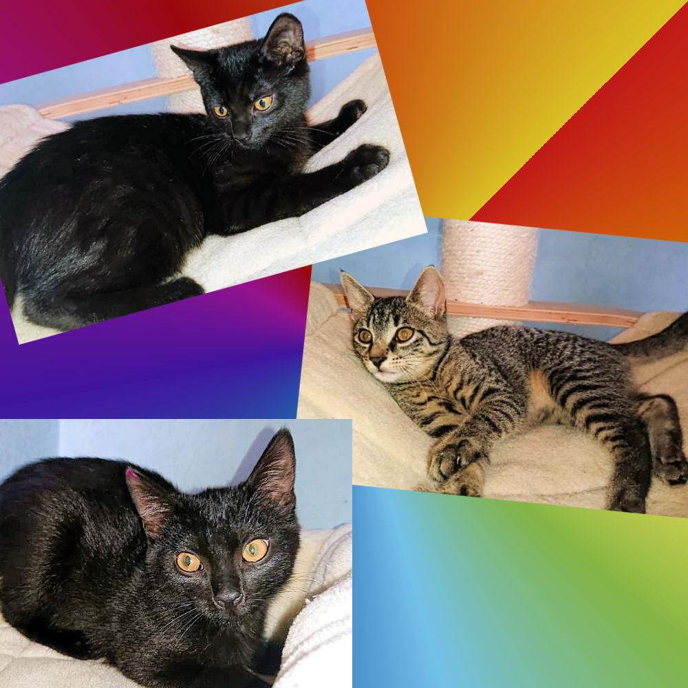 drei Katzenbilder auf farbigem Hintergrund