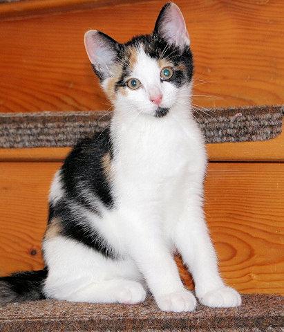 dreifarbige Katze sitzt auf einer Treppenstufe, schaut in die Kamera