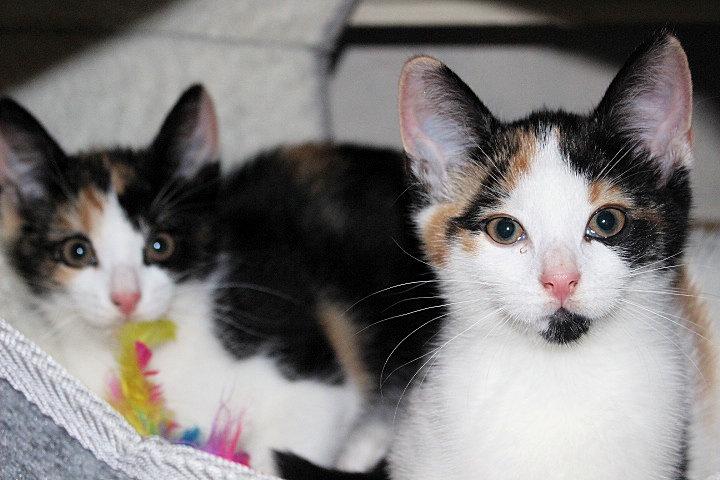 zwei dreifarbige Katzen in einer Kathenhöhle
