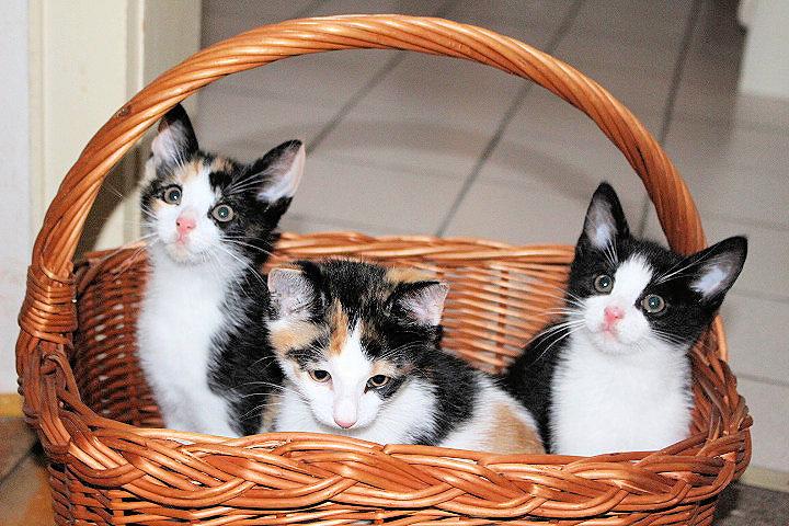 drei kleine Katzen schauen aus einem Einkaufskorb