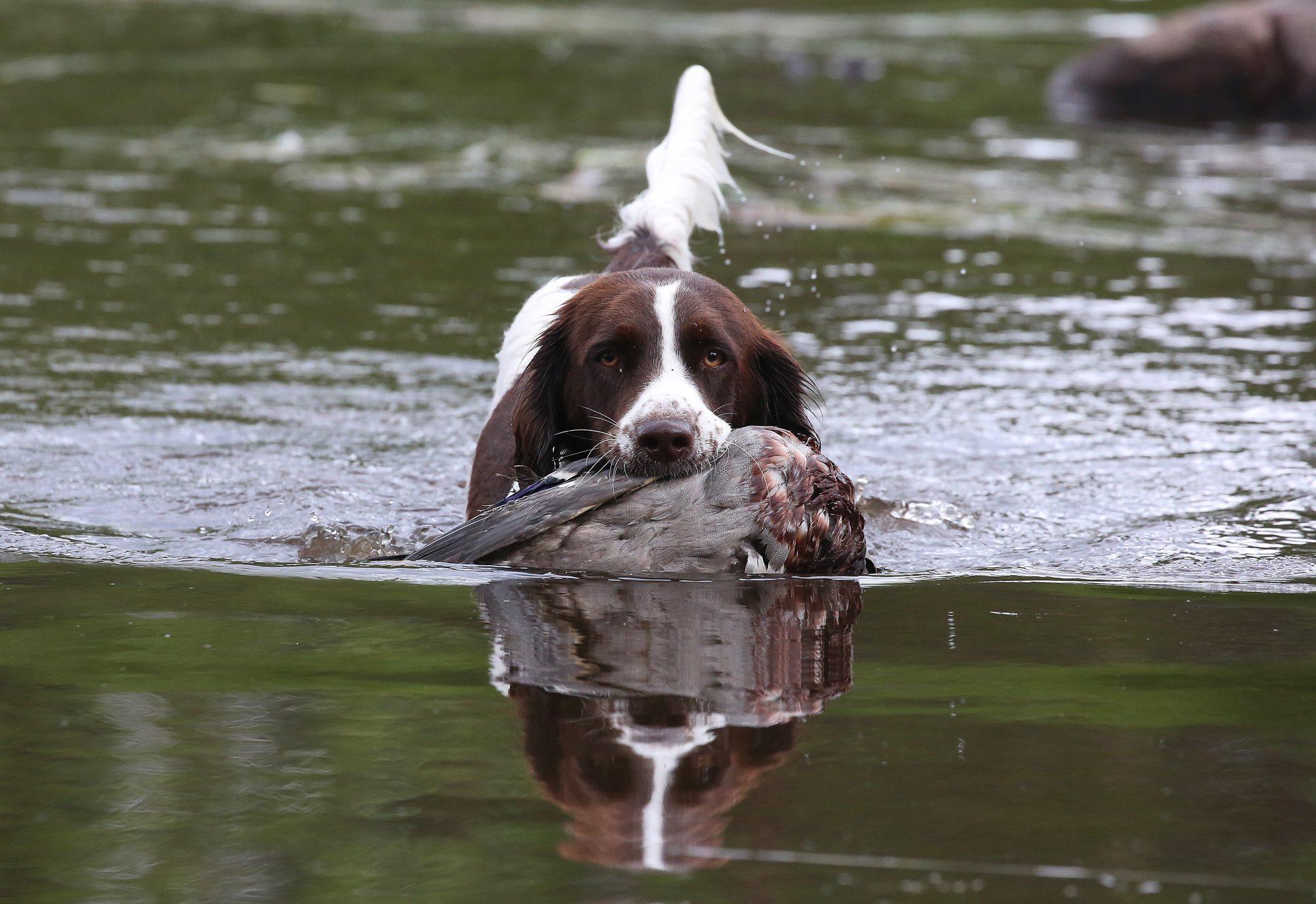 Drente i vand