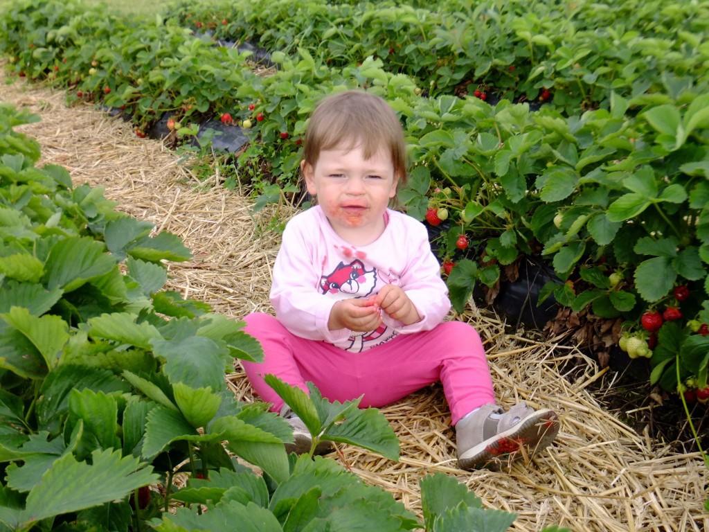 Erdbeer Ausflüge 1024x768 - Fotogalerie