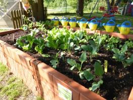 Gemüsebeet Kid Zone Kinderbetreuung 1 263x197 - Obst- und Erlebnisgarten