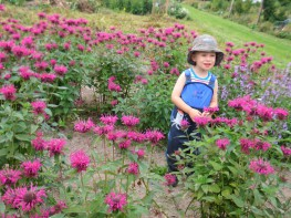 Naturerlebnis Kid Zone Kinderbetreuung 1a 263x197 - Kita Kid Zone Kinderbetreuung für 0-3 Jahre in Jersbek