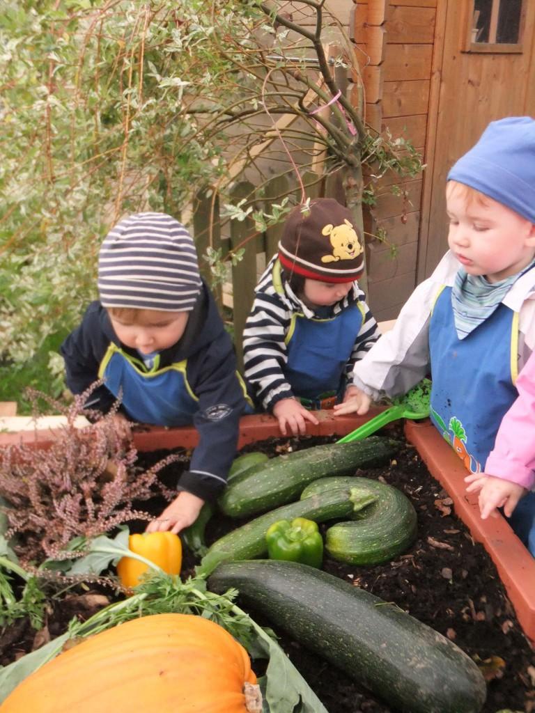 unsere Gemüsebeeternte 768x1024 - Fotogalerie