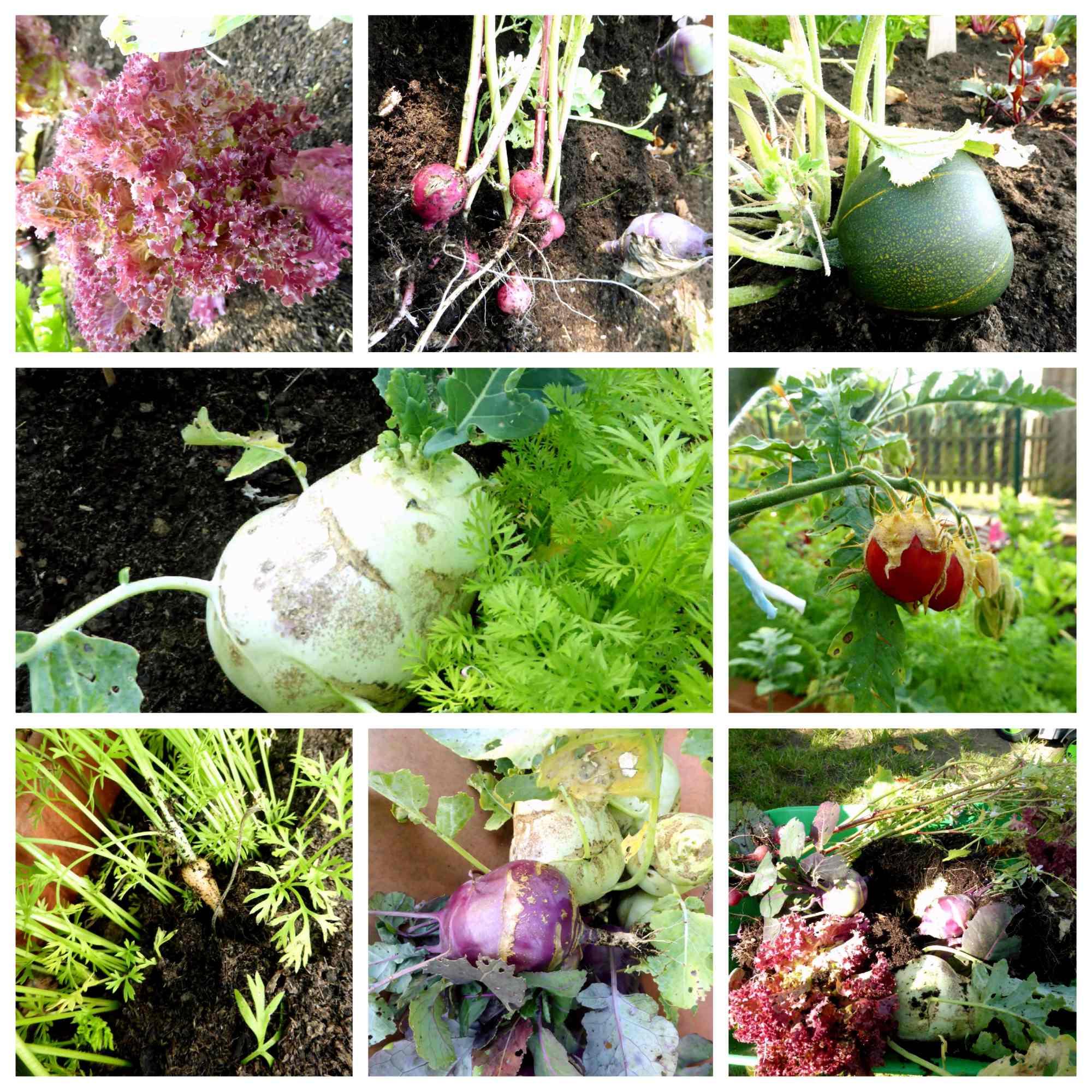 Kita Jersbek Gemüsebeet Aktion 2019 - Gemüsebeet für Kinder