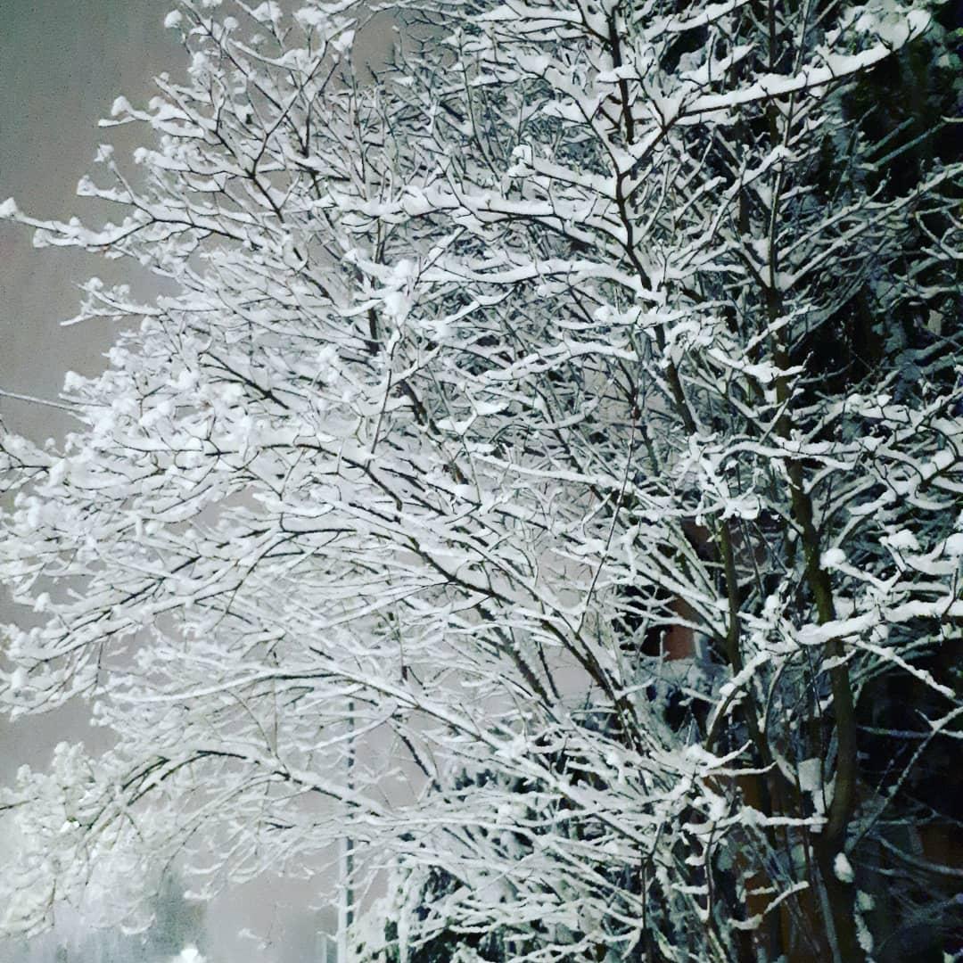 Der weiße Niederschlag türmt sich elegant auf die Äste und Zweige