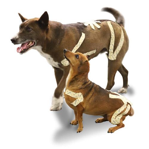 Kinesio Canine - honden