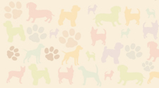 Kinesio Canine Tape