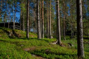 Kinkamon Aalto sijaitsee aivan vetten äärellä ja mäntymetsän katveessa Varkaudessa. Täällä järjestät monipuolisesti juhlat ja kokoukset.