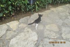 Katzenpark2