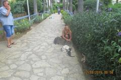 Katzenpark3