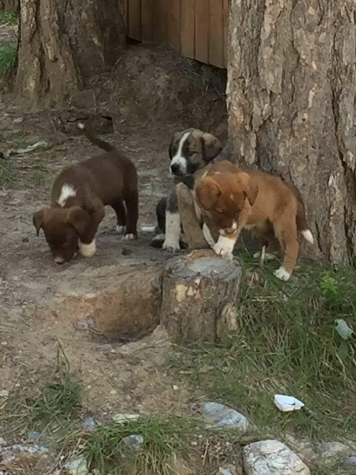 Baustellenhunde/Berghunde