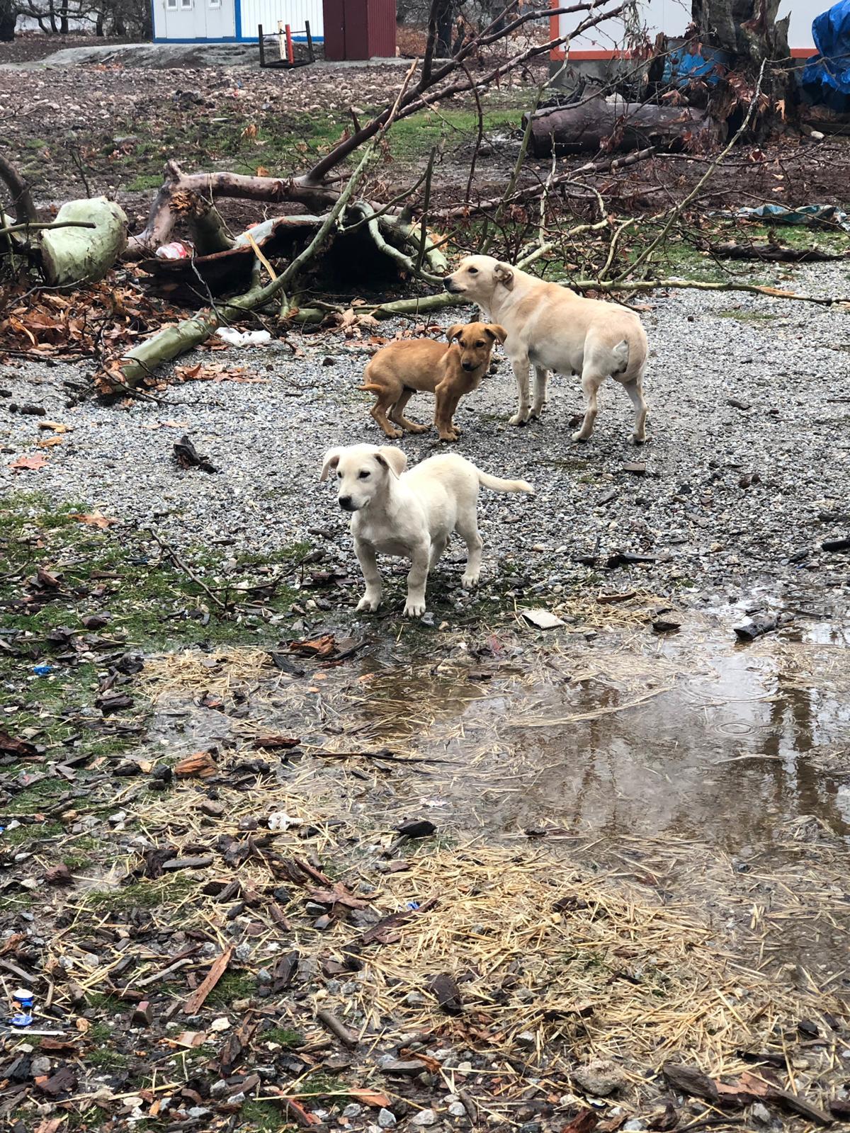 Berghunde/Baustellenhunde