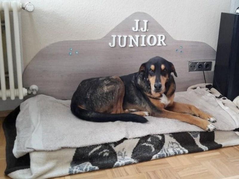 J. J. Junior