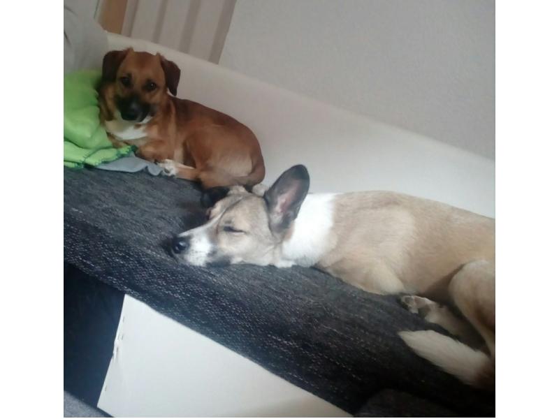 Tiara & Luna (Bella)