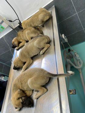 Unsere Hunde der Fütterungsrunde