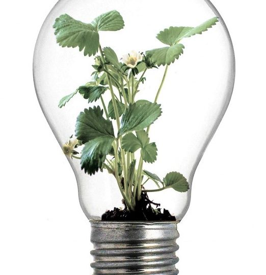 Bæredygtighed - bæredygtig forretningsudvikling