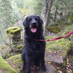 Zwarte hond in het bos