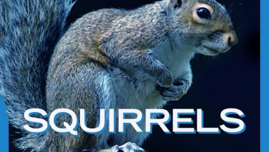 Photo of Gee Paw – Squirrels