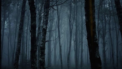 Photo of No Signal – Vanished