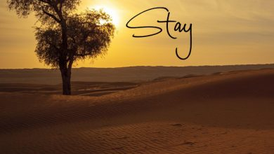 Photo of Sara Hecht – Stay