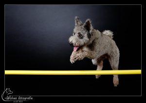 Tabuh - Pumi - Hondenfotografie - Dierfotografie - Actiefotografie - Door: Ellen Reus - Wolves fotografie