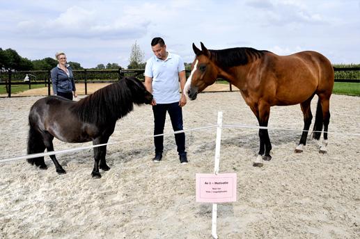 Paardencoaching Ommen - Kom in je kracht