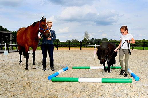 Paardencoaching Ommen - Coaching_met_paarden