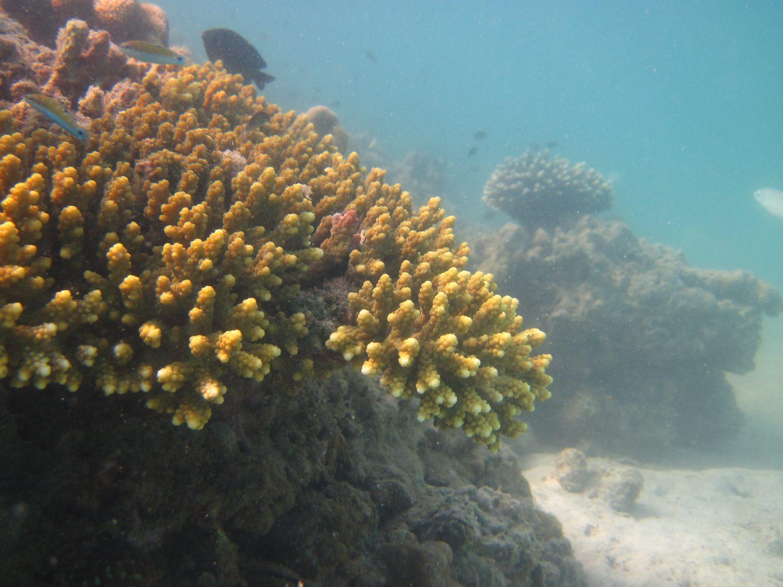 Naturlige korallrev