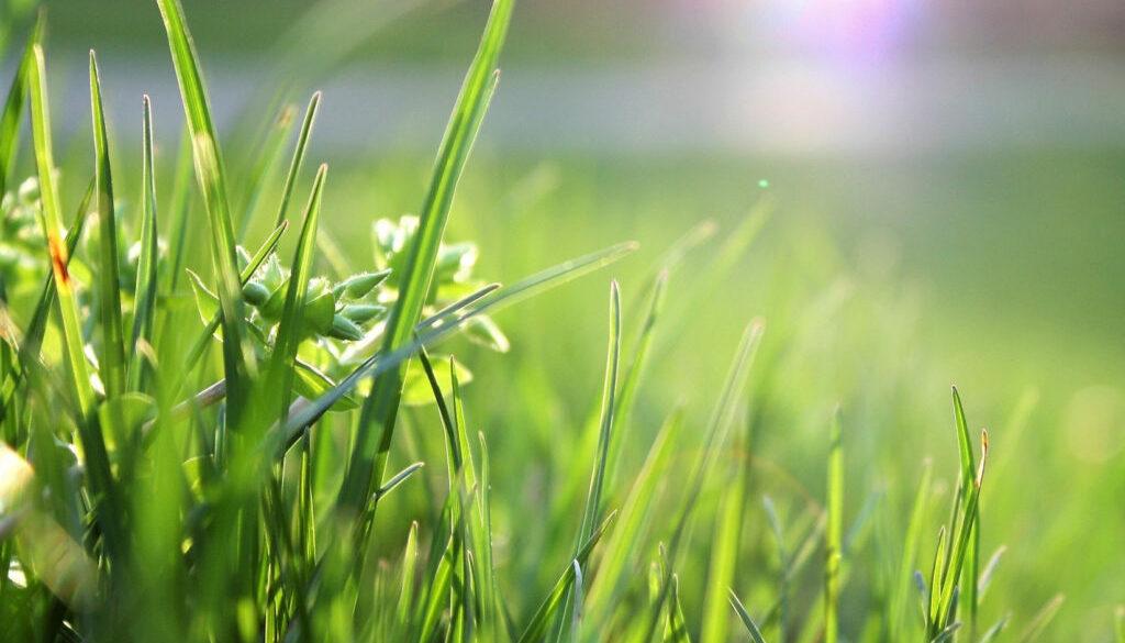 02 blade-of-grass-depth-of-field-environment-garden-580900