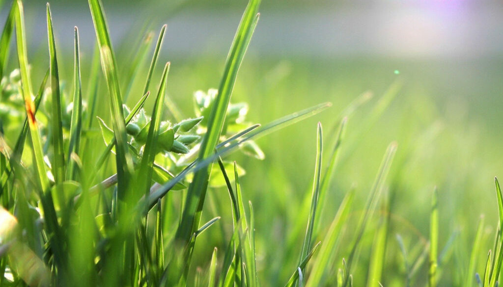 02 blade-of-grass-depth-of-field-environment-garden-580900
