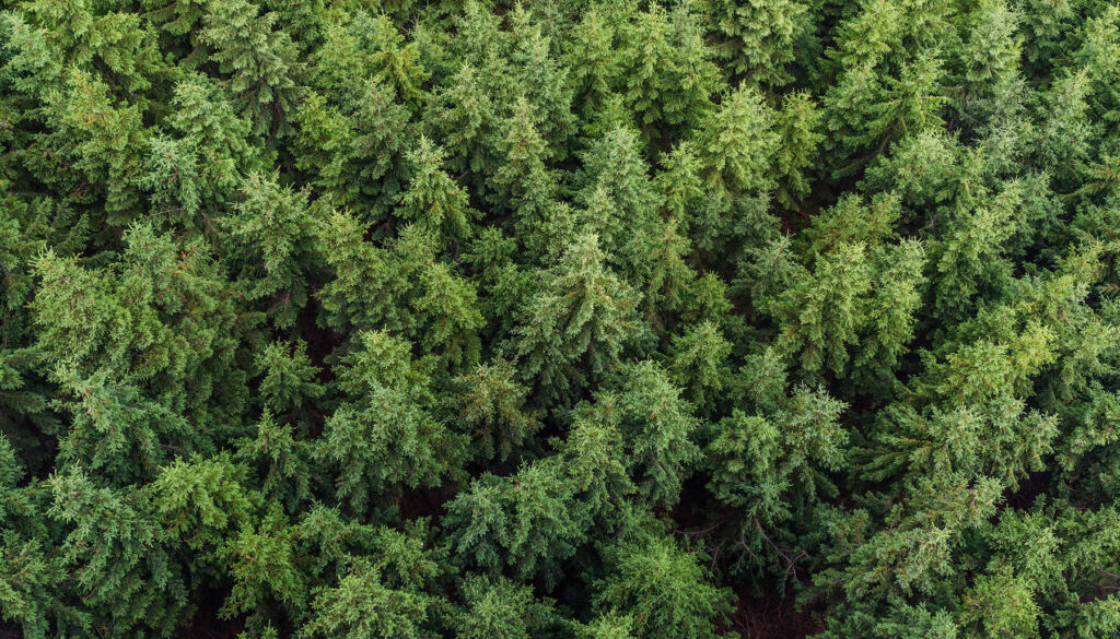 aerial-view-conifers-fir-trees-forest-574190