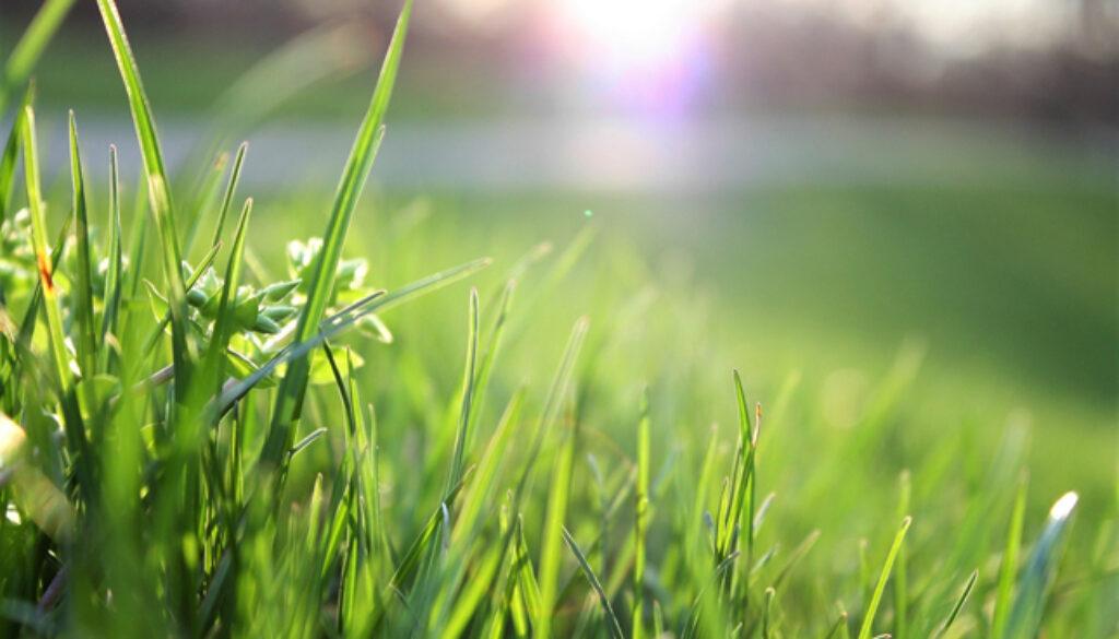 blade-of-grass-depth-of-field-environment-garden-580900