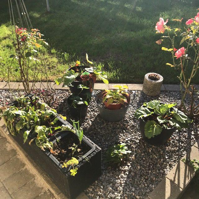 Spisehjørnet haven