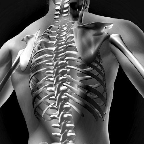Ledfrigørelse af ryggen