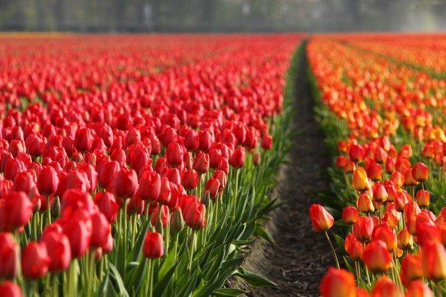 Niederlande – Warnung gegen Binance