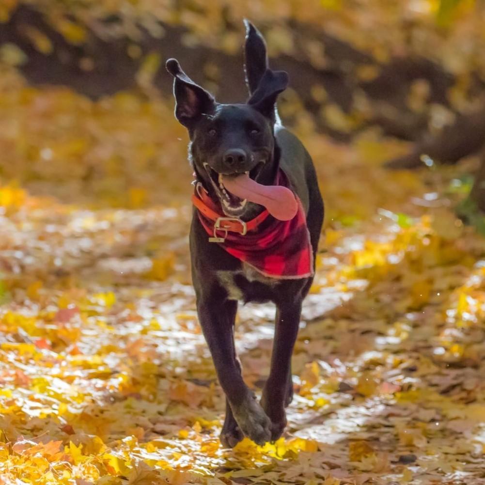 Priser for KST behandling til hunde - link - Krani-Sakral Terapi for din hund