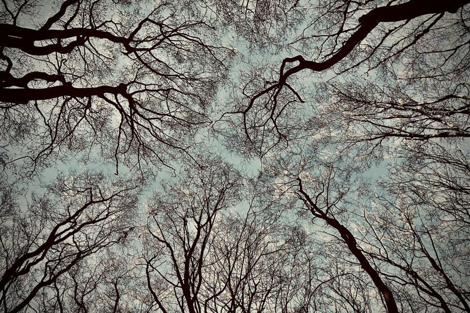 Lookup 2 - Fotografie - 20 x 30 cm