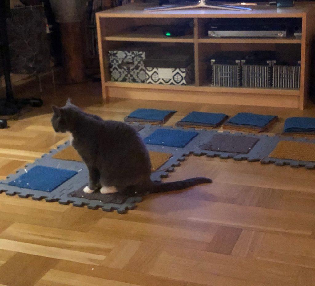 8 stickade rutor är uppnålade på ett golvpussel, Frasse-katt sitter på en av rutorna.