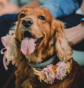 hondjes bij je huwelijk lady hill