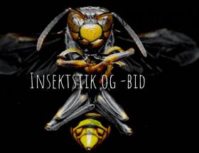 Insektstik