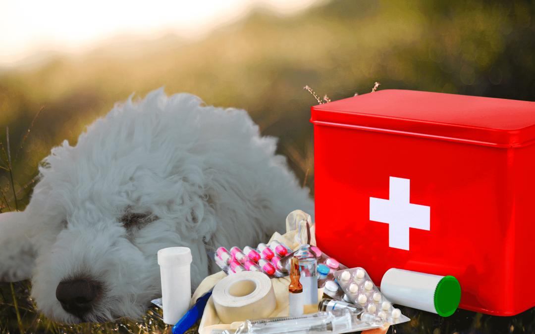 Was gehört in eine Hundeapotheke?
