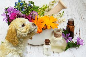 Hundeapotheke homöopatisch