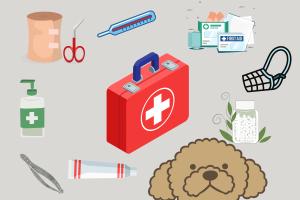 Checkliste Hundeapotheke