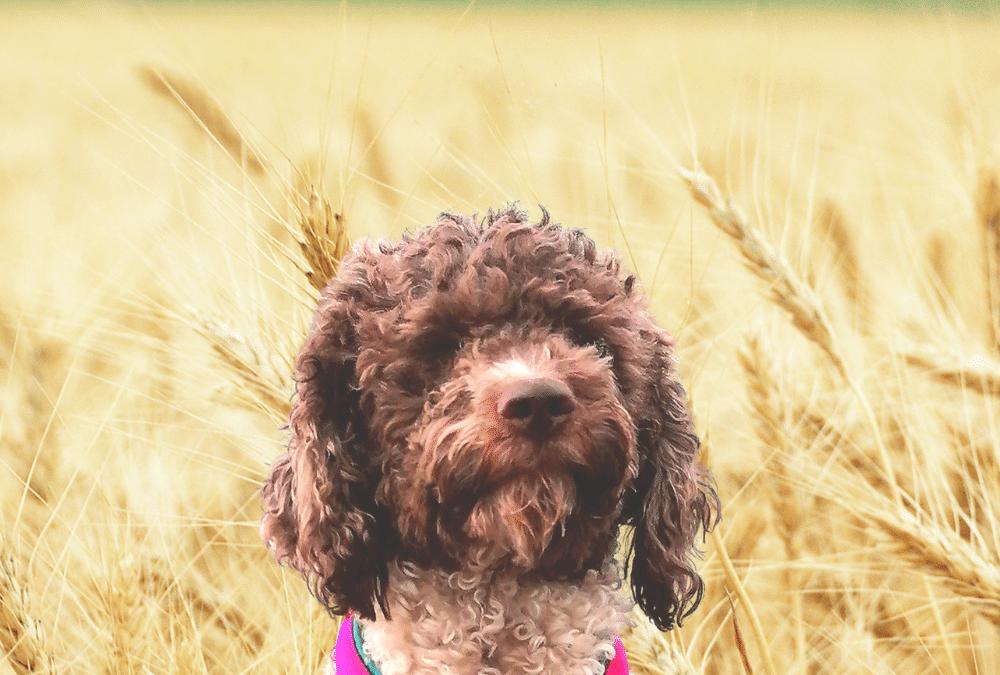Gefahr für Hunde: Grannen