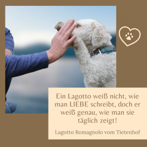 Die schönsten Lagotto Sprüche