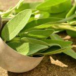 Salvia och andra tips mot svettningar och hotflashes