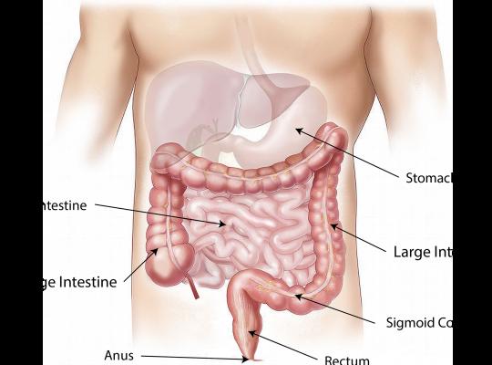 Mag- och tarmkanalen