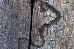 Skrivet i barken